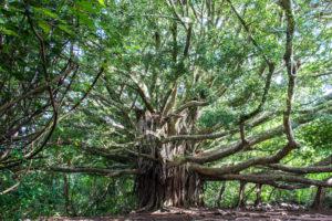 Verlobung Tree of life